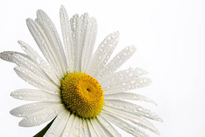 Photograph - Daisy Face by Mary Jo Allen