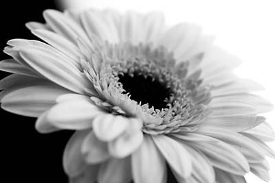 Daisy Flower In Black And White Art Print