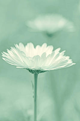 Photograph - Daisy Flower In Pose Light Green by Jennie Marie Schell