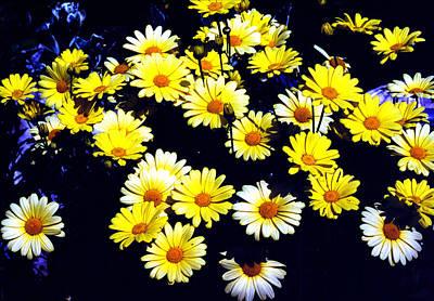 Photograph - Daisy Garden by Robert  Rodvik
