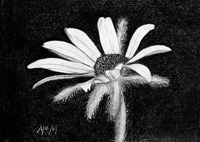 Daisy Drawing - Daisy by Garry McMichael
