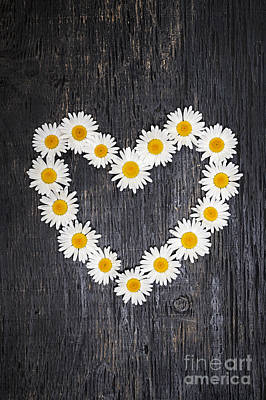 Daisy Heart On Dark Wood Art Print by Elena Elisseeva