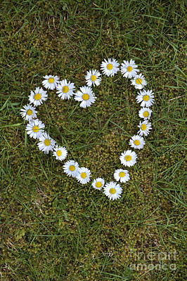 I Love You Photograph - Daisy Heart by Tim Gainey