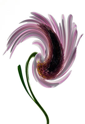 Photograph - Daisy In A Twirl by Terence Davis