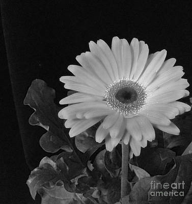 Photograph - Daisy In Black And White by Kristi Kruse