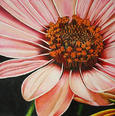 Drawing - Daisy In Pink by Bruce Bley