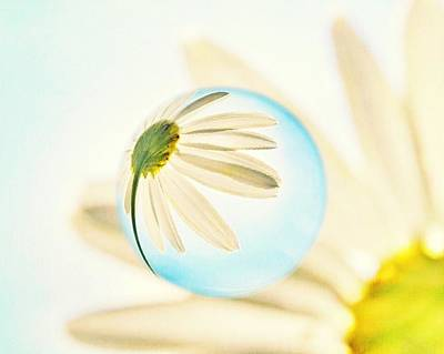 Contemporary Floral Photograph - Daisy In The Bubble by Marianna Mills