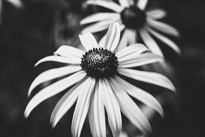 Photograph - Daisy In The Dark by Kimberly Ayars