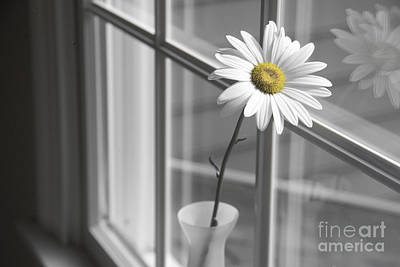 Daisy In The Window Art Print by Diane Diederich