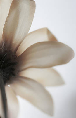 Photograph - Daisy by Kathleen Messmer