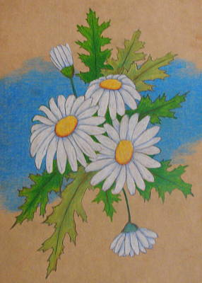 Drawing - Daisy by Lew Davis