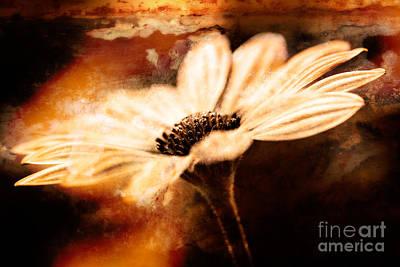 Photograph - Daisy by Lori Dobbs