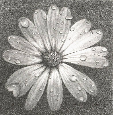 Daisy Drawing - Daisy by Melissa Unruh