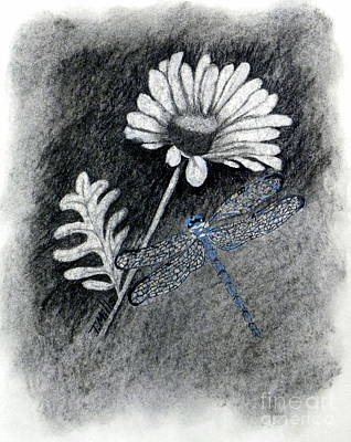 Drawing - Daisy N Dragonfly by Terri Mills