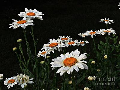 Photograph - Daisy Power by Marcia Lee Jones