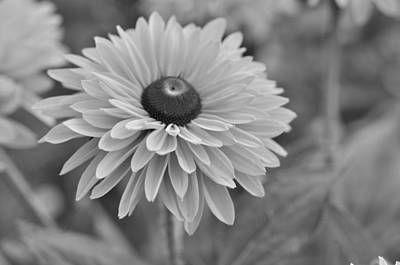 Photograph - Daisy  by Puzzles Shum