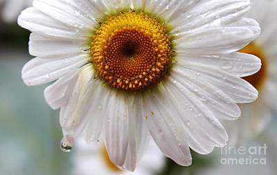 Daisy Reflect Art Print