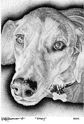Drawing - Daisy by Rob Christensen