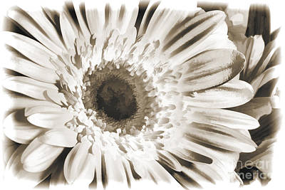 Painting - Daisy Spring Flower Pastel Painting In Sepia 3177.01 by M K Miller