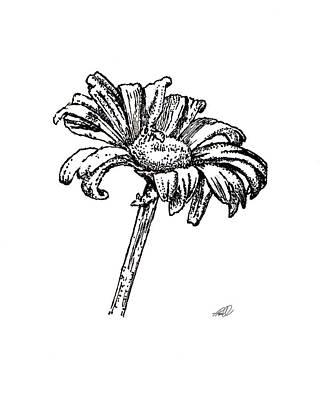 Daisy Drawing - Daisy by Tanya Hamell