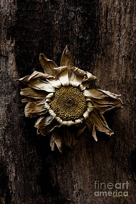 Photograph - Daisy Three  2010 by Matthew Turlington