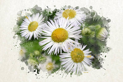 Daisy Watercolor Art Art Print