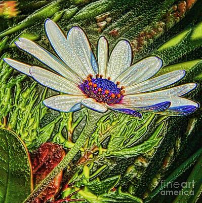 Photograph - Daisy Wrapped By Diana Sainz by Diana Raquel Sainz