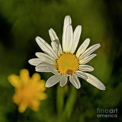 Daisy Photograph - Daisynette - 726-v3a by Variance Collections