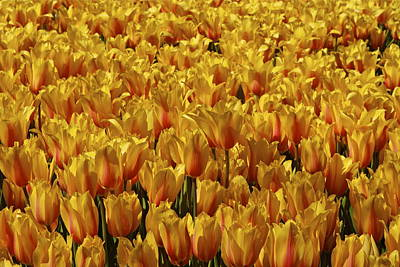 Art Print featuring the photograph Dallas Blooms by John Babis
