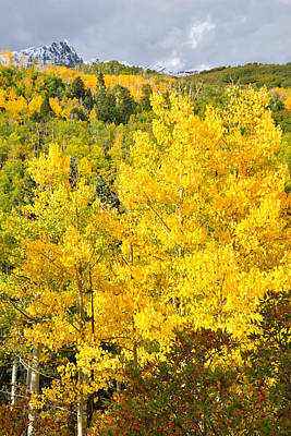 Photograph - Dallas Creek Alpine Aspens by Ray Mathis