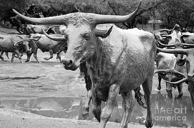 Cattle Drive Photograph - Dallas Texas Pioneer Plaza Cattle Drive Bronze Sculpture Black And White by Shawn O'Brien