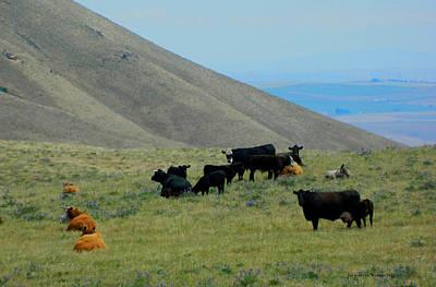 Photograph - Dalles Mountain Cows by Jacqueline  DiAnne Wasson