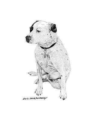 Pen And Ink Drawing Drawing - Dalmatian Mix Good Friend by Jack Pumphrey