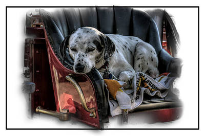 Photograph - Dalmatian On Fire Truck by Thomas  Jarvais
