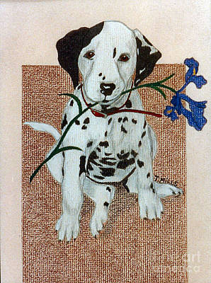 Drawing - Dalmatian Puppy by Terri Mills