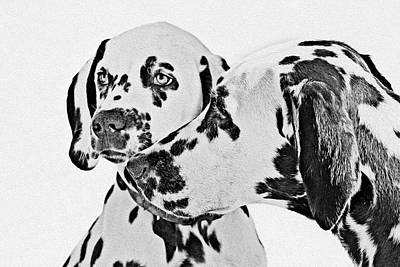 White Dogs Painting - Dalmatians - A Great Breed For The Right Family by Christine Till