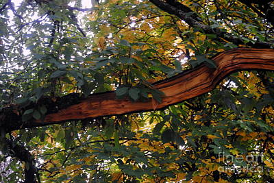Photograph - Damaged Tree by Rachael Shaw