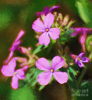 Pink Flowers Photograph - Dames Rocket by Kerri Farley