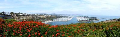 Photograph - Dana Point by Diane Height