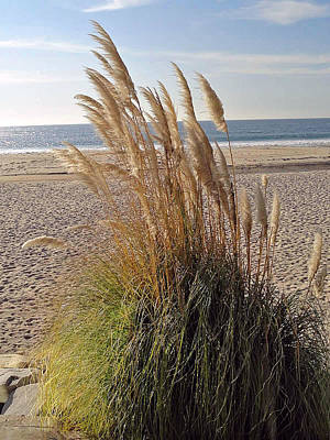 Photograph - Dana Point Grasses by Robert Meyers-Lussier