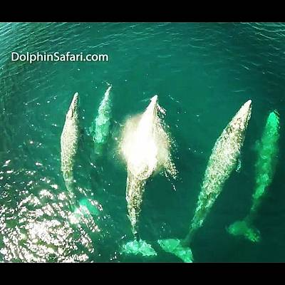 Photograph - #danapoint #whales On There Way For by Paul Carter