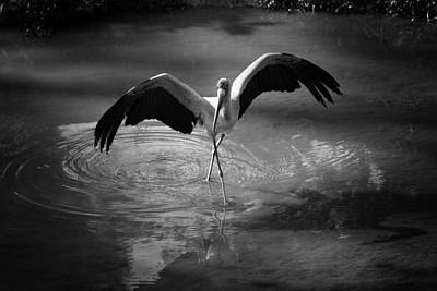 Stork Photograph - Dance Like There Is No Tomorrow by Zoe Ferrie