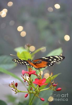 Art Print featuring the photograph Dance Of The Butterfly by Carla Carson