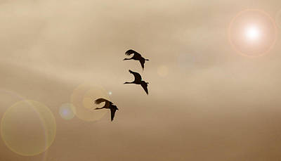 Photograph - Dance Of The Cranes by Patricia Dennis