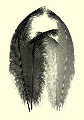 Plum Drawing - Dance Of The Feathers by David Dehner