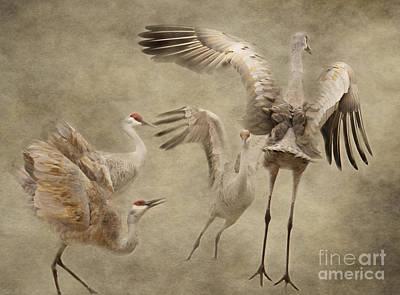 Dance Of The Sandhill Crane Art Print