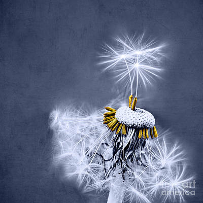Dandelion Photograph - Dance With Me by INA FineArt