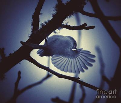 Ruby-crowned Kinglet Birds Photograph - Dancin' In The Moonlight by Teresa A Lang