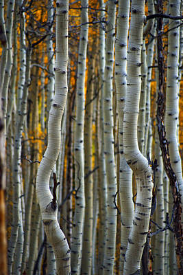 Photograph - Dancing Aspens by Jeremy Rhoades