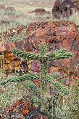 Photograph - Dancing Cactus by Susan Herber